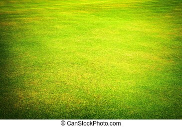Green grass field of golf course