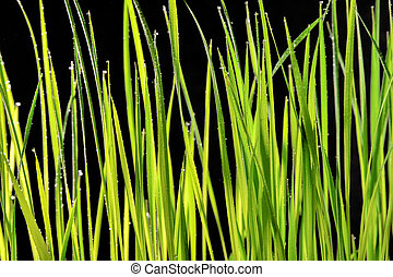 green grass field on a black background