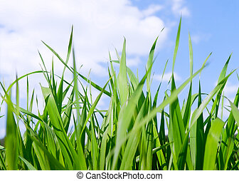 Green grass field under midday sun in blue sky.
