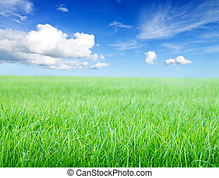 Green grass field under midday sun on blue sky.