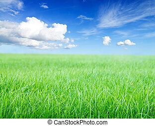 Green grass field under midday sun on blue sky.
