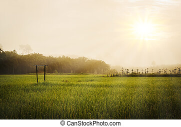 Green grass field with morning sky