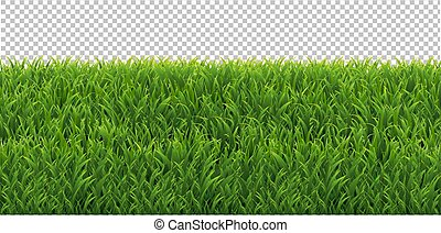 Green Grass Frame Transparent Background