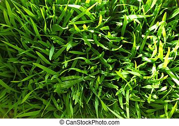 Green grass fresh background