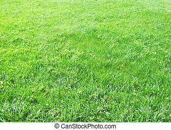 green grass great as a background
