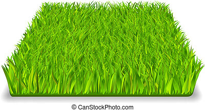 green grass - Green grass square realistic isolated vector ...