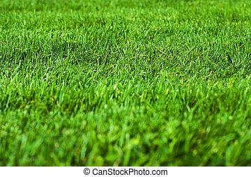 green grass - Green grass texture