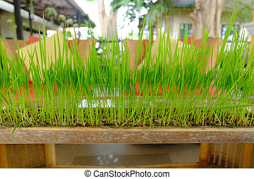 Green grass growing in a pot made from bamboo.