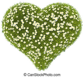 Green grass heart shape with camomile flowers isolated