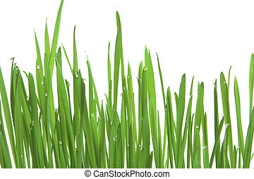 Green grass, horizontal format - Fresh green grass with...