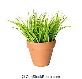 Green grass in a ceramic pot