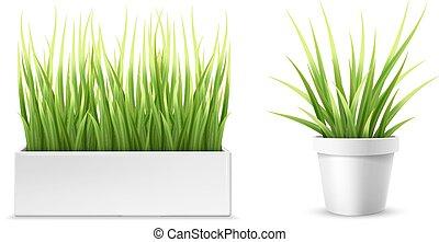 green grass in a rectangular and round pot
