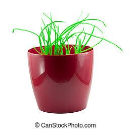 Green grass in a red pot