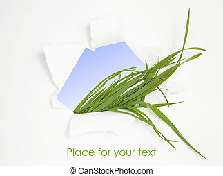Green grass in abstract window. Spring background