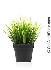 green grass in black pot, isolated on white
