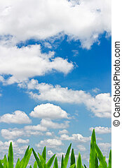 Green grass in blue sky with clouds.