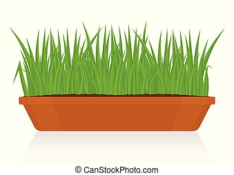 Green Grass in Clay Pot Isolated