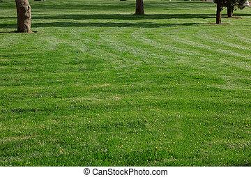 Green grass in garden. Spring gardening