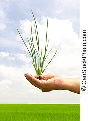 green grass in hand