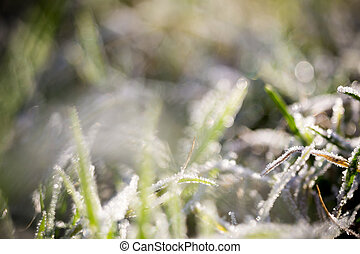 Green Grass in Hoarfrost
