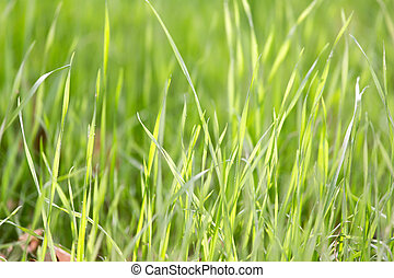 green grass in nature