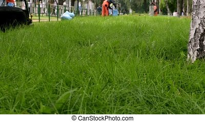 Green grass in park. Group of city gardeners working with...