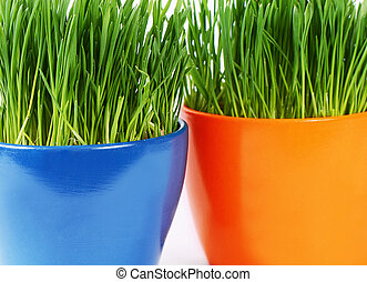 Green grass in pot a background