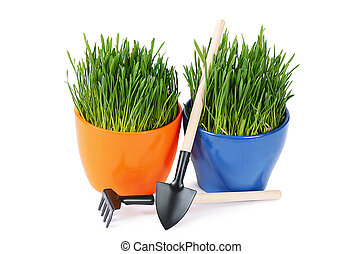 Green grass in pot isolated on white background