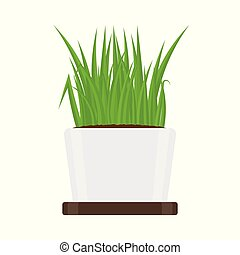 Green Grass in Pot Isolated