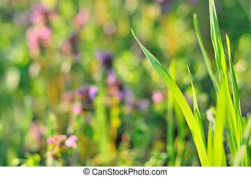 Green grass in spring time