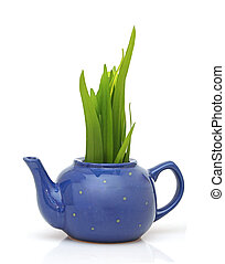 Green grass in teapot isolated on white