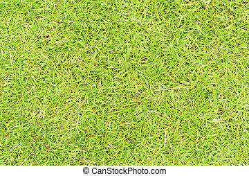 Green grass in the background