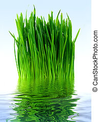 Green grass in the blue water