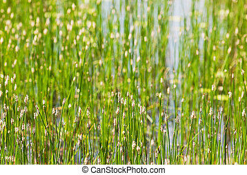 Green grass in the lake