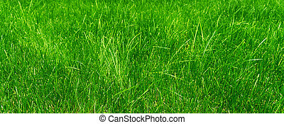 green grass in the meadow on a sunny day