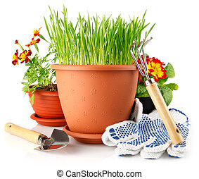 green grass in the pot with red flowers