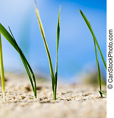 green grass in the sand in the nature