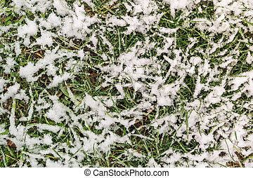Green grass in the snow