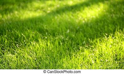 green grass in the summer park