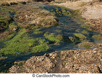 Green grass in the warm water of a thermal spring