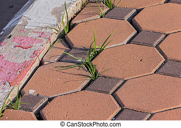 green grass insert red white lines