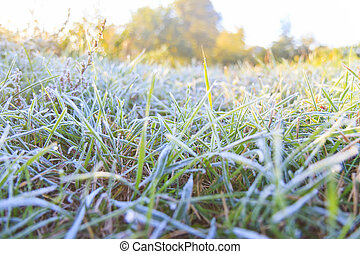green grass is covered with frost in the morning rays of the sun