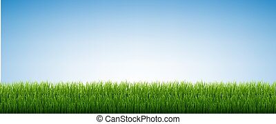 Green Grass Isolated Blue Sky Background