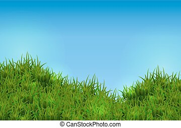 Green grass isolated on blue sky background.
