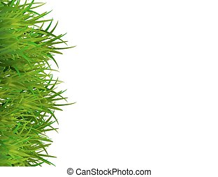 Green grass isolated on white background with space for text.