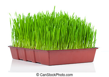 Green grass. Isolated, over white background