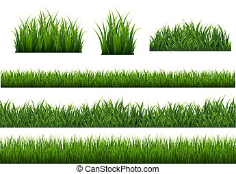 Green Grass Isolated White Background