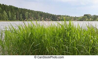 green grass, lake