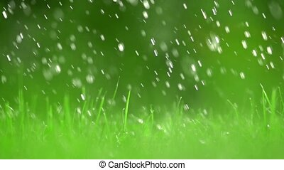 Green grass lawn and falling raindrops, shallow DOF. Super...