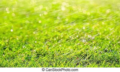 green grass lawn watering